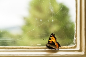 The Dubai Princess and Domestic Abuse butterfly in window